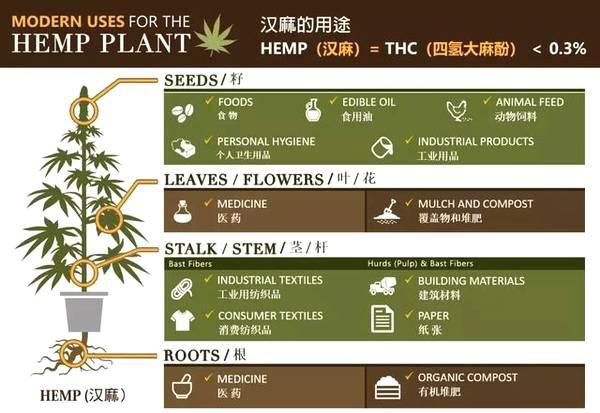 工业大麻投资机会